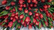 Цветы тюльпаны к 8 Марта