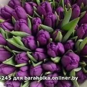 Тюльпаны свежие оптом к 8 марта